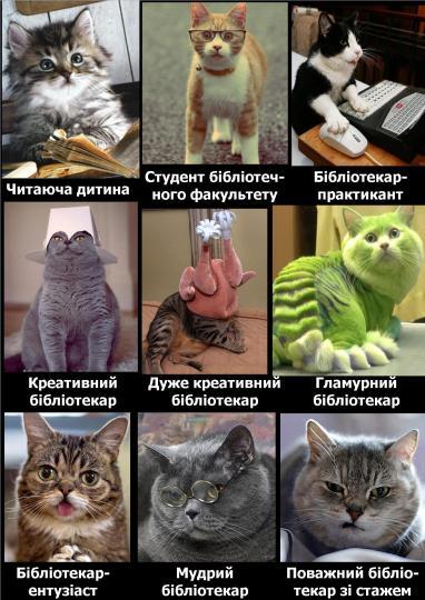 коти7
